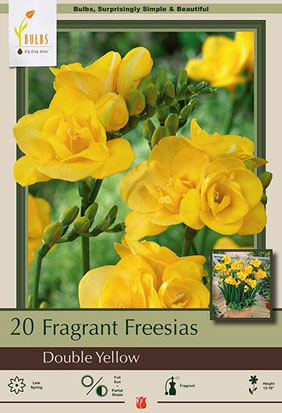 Fragrant Freesia Freesia Double Flowering Yellow From Netherland Bulb
