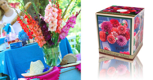 Unit DM-16 Dahlia Mix in Gift Box